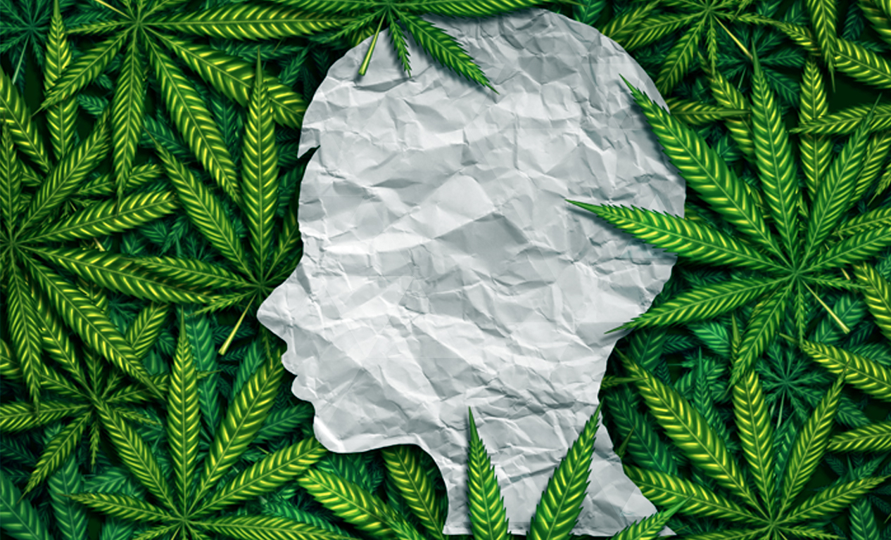 the body's relationship to cannabis